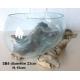 vase ou aquarium évasé SB4